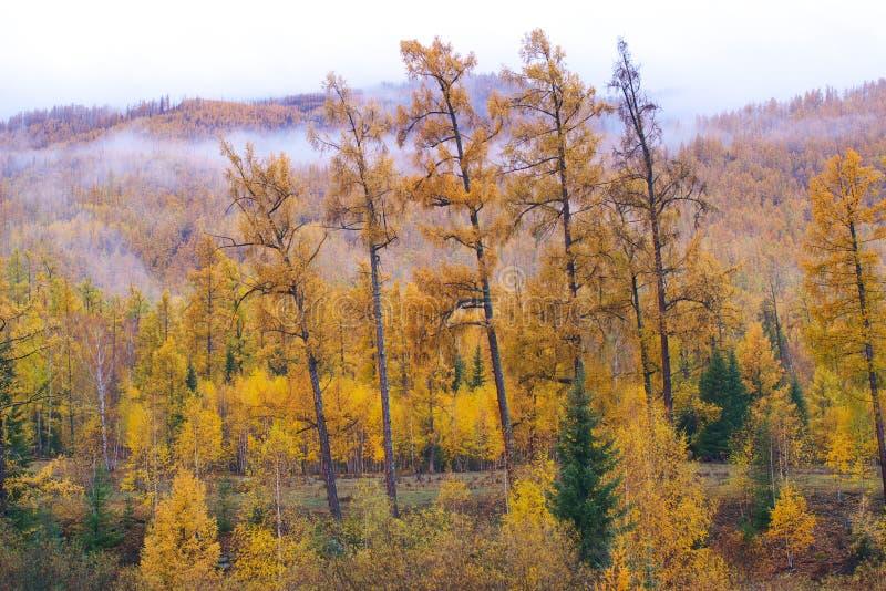 Forêt en côte images stock