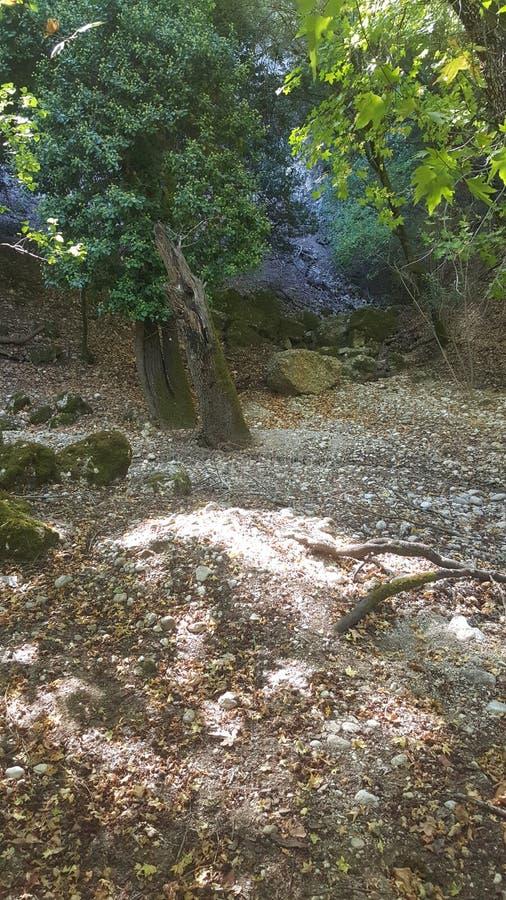 Forêt en Grèce photographie stock