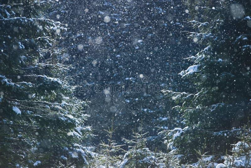 Forêt en hiver images stock