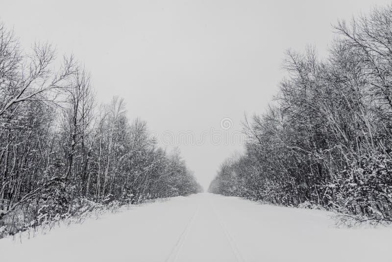 Forêt en hiver photographie stock