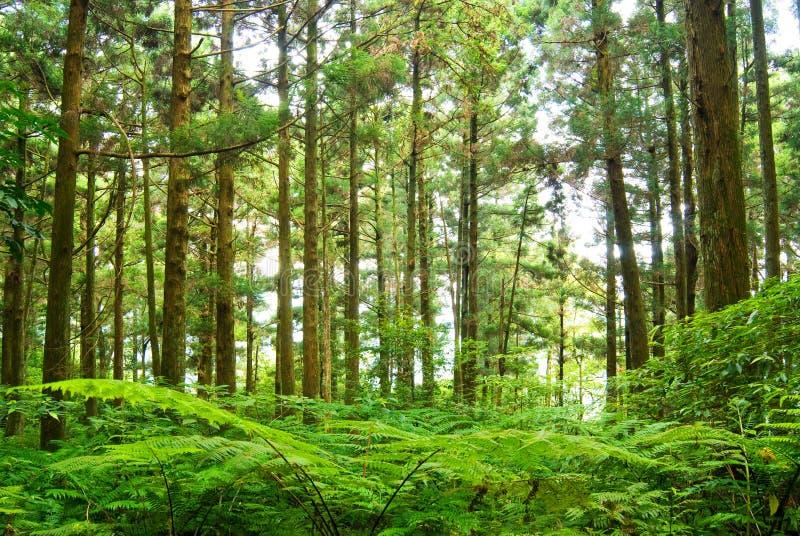Forêt en montagne photographie stock libre de droits
