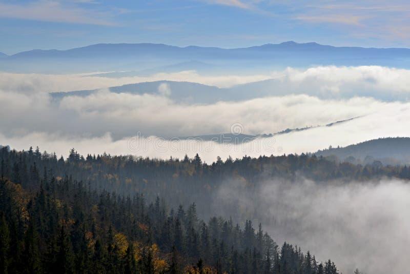 Forêt en nuages en automne photographie stock libre de droits