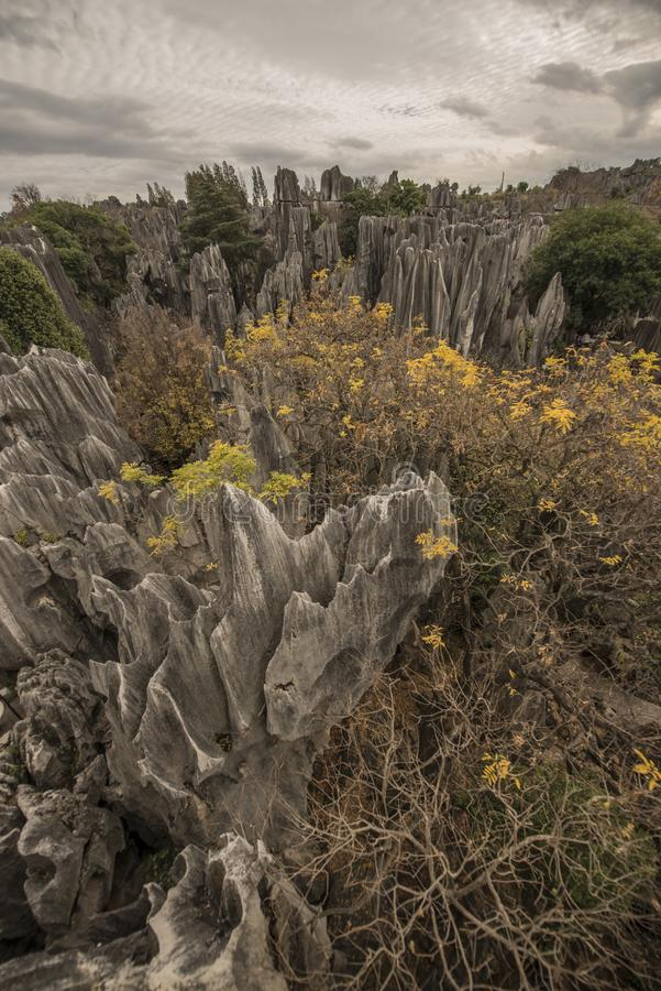 Forêt en pierre 5 grands-angulaires images stock
