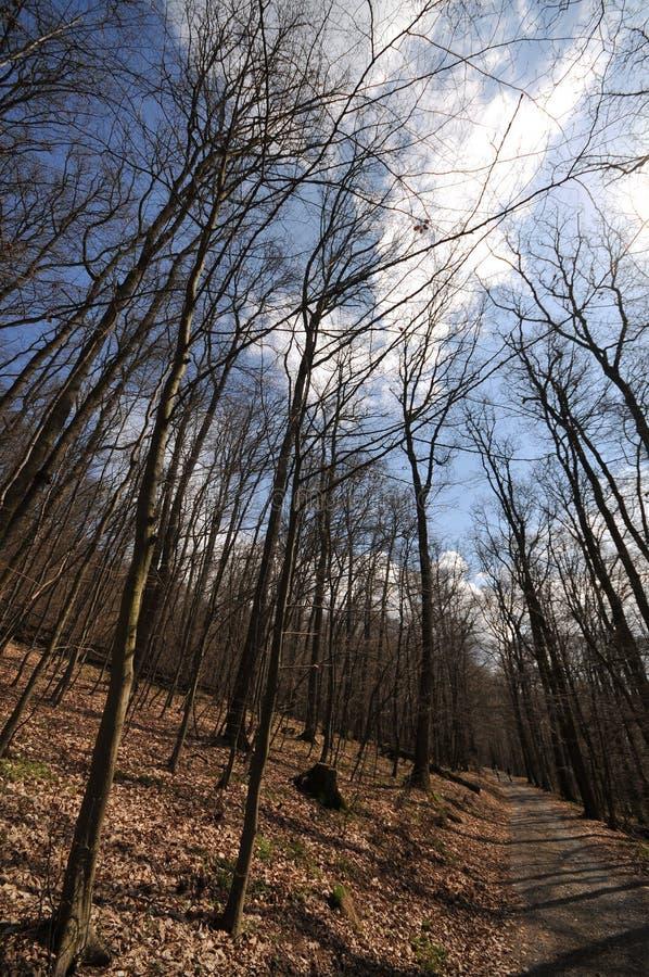 Forêt en premier ressort image stock