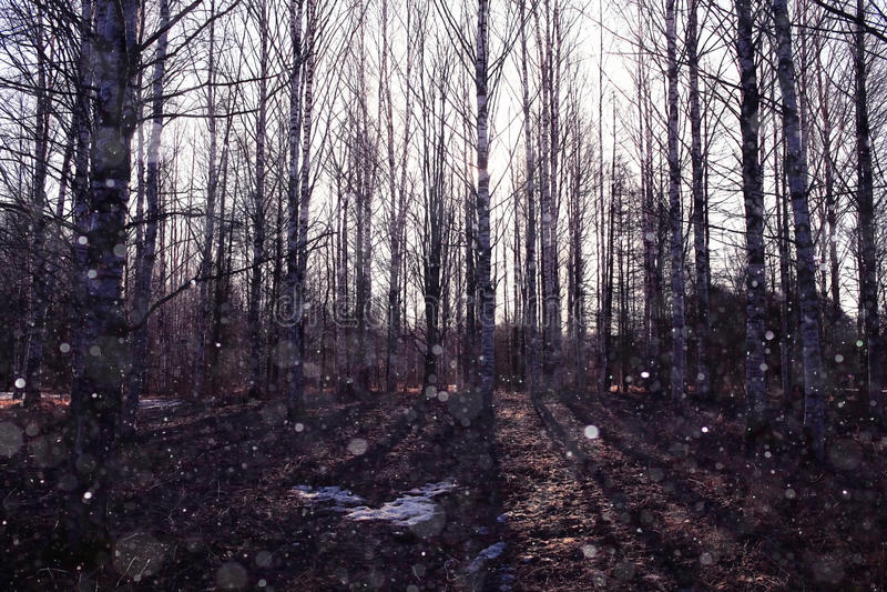 Forêt en premier ressort photos stock