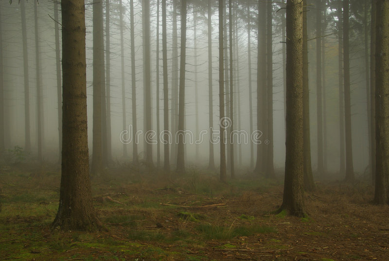 Forêt en regain photo stock