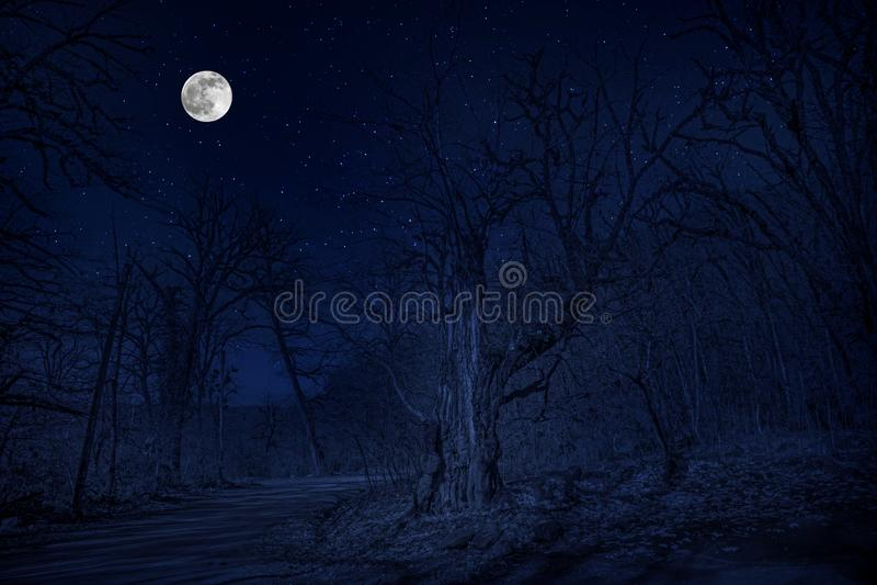 Forêt en silhouette avec le ciel nocturne étoilé et la pleine lune, fond de Halloween Forêt fantasmagorique avec la pleine lune photo libre de droits