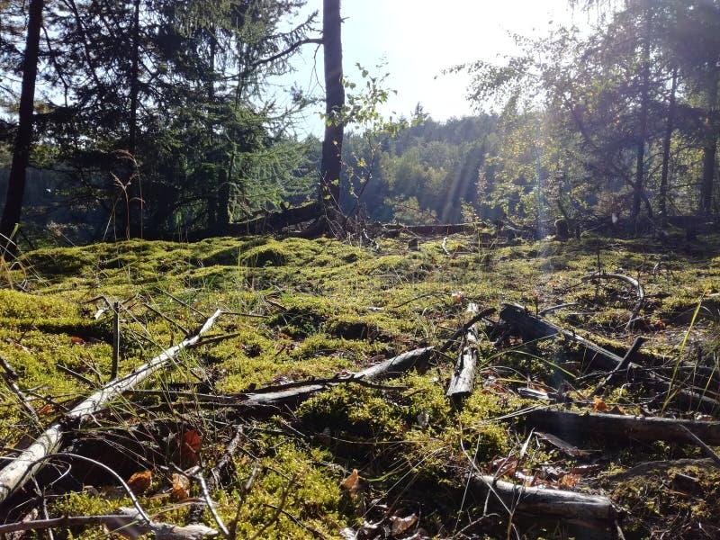 Forêt en soleil de midi photo libre de droits