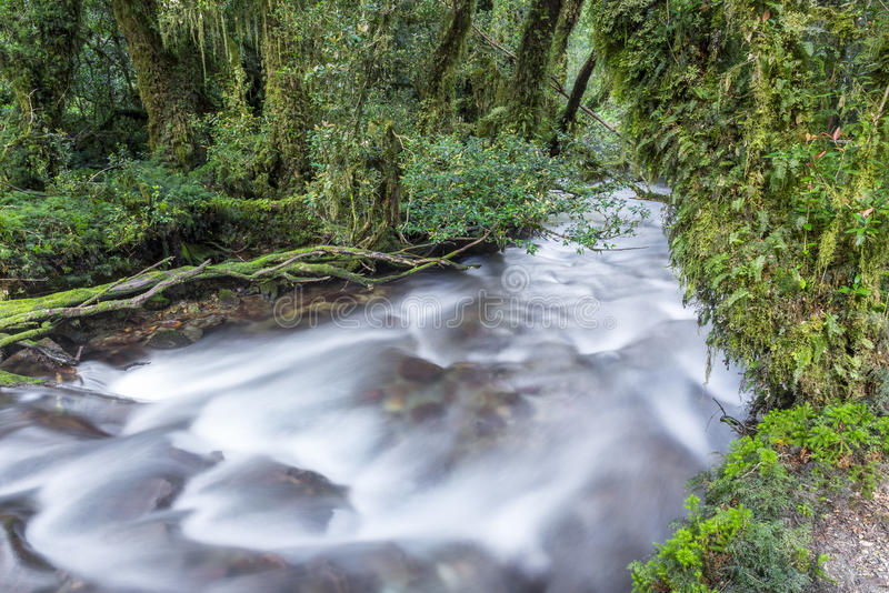Forêt enchantée, parc national de Queulat (Chili) photo stock
