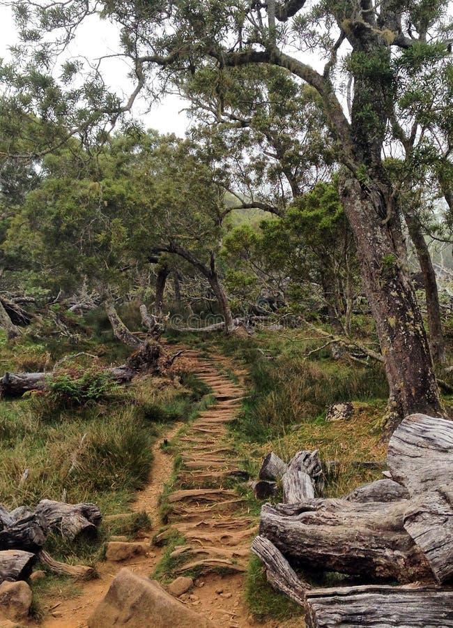Forêt endémique tropicale, Reunion Island image libre de droits