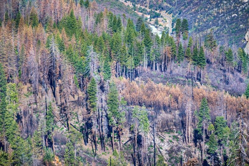 Forêt endommagée par l'incendie en parc national de Yosemite, montagnes de Sierra Nevada ; Portail d'EL, Californie et rivière de images libres de droits