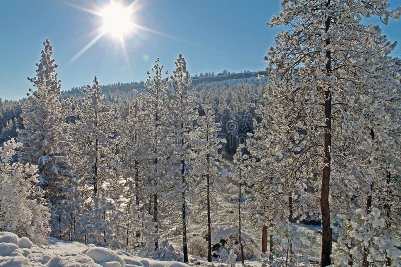 Forêt ensoleillée d'hiver dedans couverte dans la neige image stock