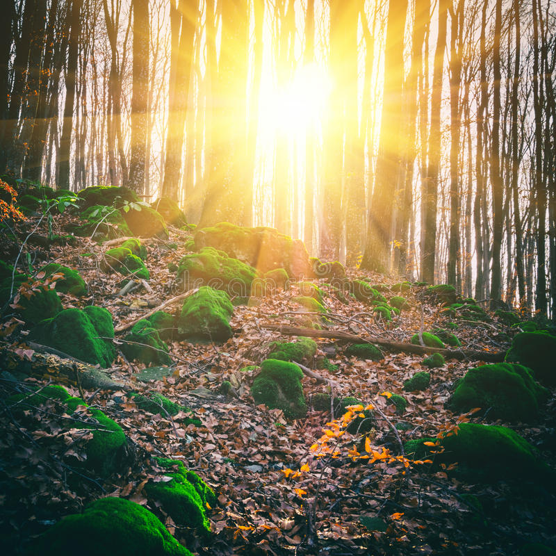 Forêt ensoleillée sauvage en Toscane, Italie image libre de droits