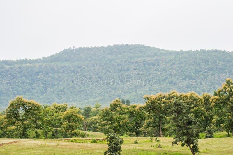 Forêt et colline d'arbres de teck dans la mousson photos libres de droits