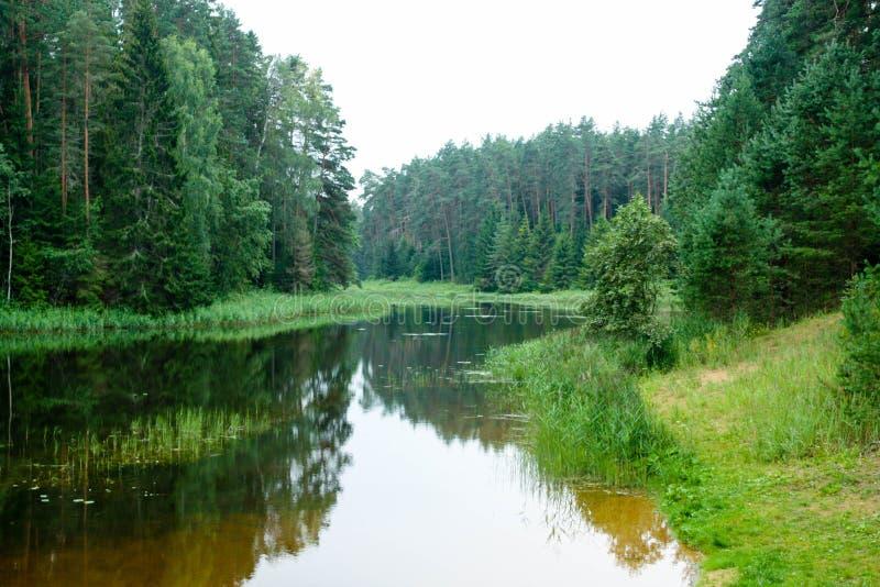 Forêt et crique photographie stock libre de droits