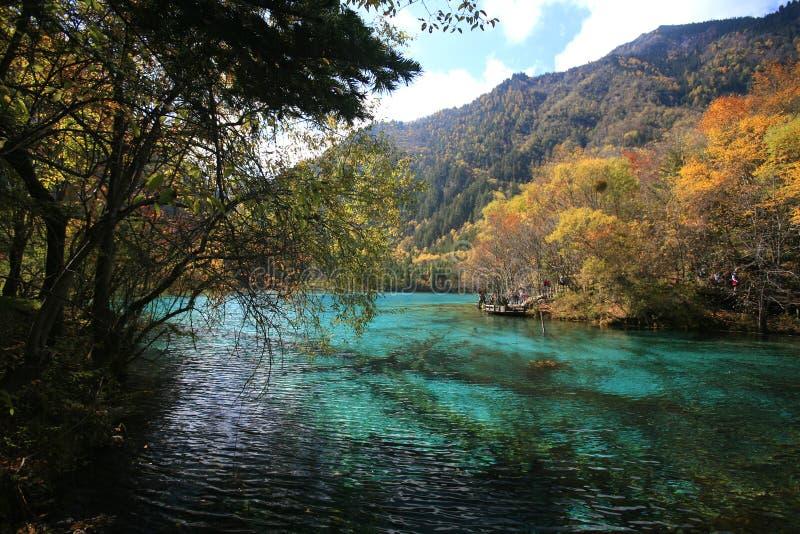 Forêt et lac image stock