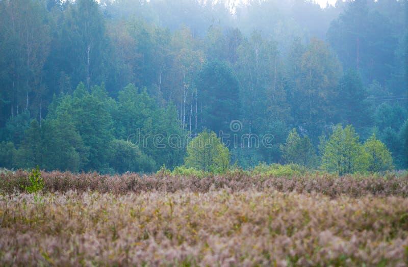 Download Forêt Et Marais, Paysage Lithuanien Image stock - Image du arbre, lithuanien: 77158891