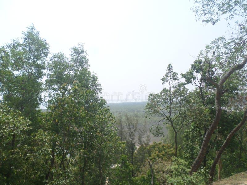 Forêt et mer de palétuvier photographie stock