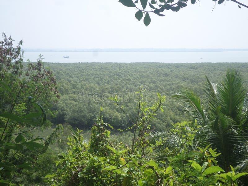 Forêt et mer de palétuvier de montagne images stock