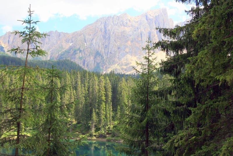 Forêt et montagne d'arbres de pin photos stock