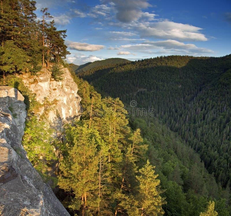 Forêt et montagnes photographie stock libre de droits