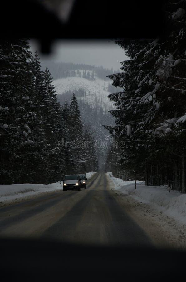 Forêt et montagnes congelées dans la neige photos libres de droits