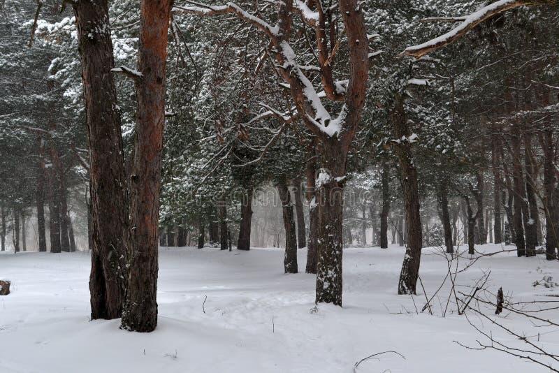 Forêt et neige lourde image libre de droits