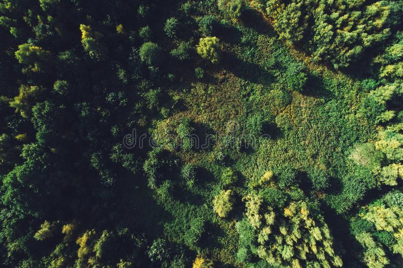 Forêt et pré verts dans la vue supérieure photographie stock