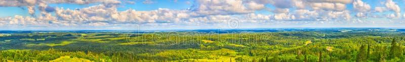 Forêt et prés coniféres Panorama photos libres de droits