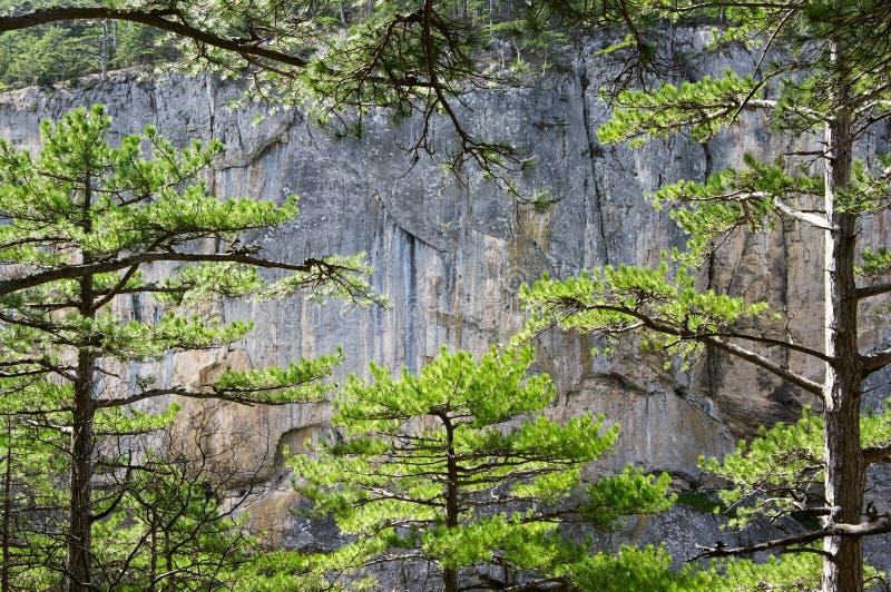 Forêt et roche de pin photographie stock