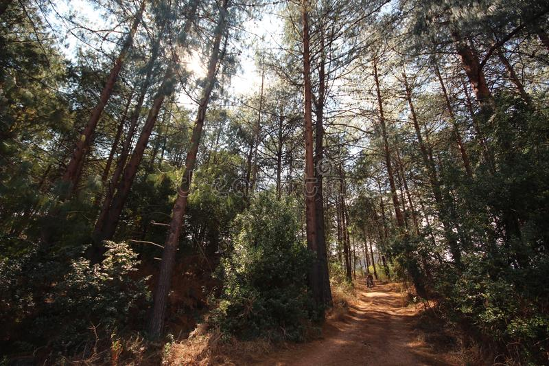 Forêt et route africaines image stock