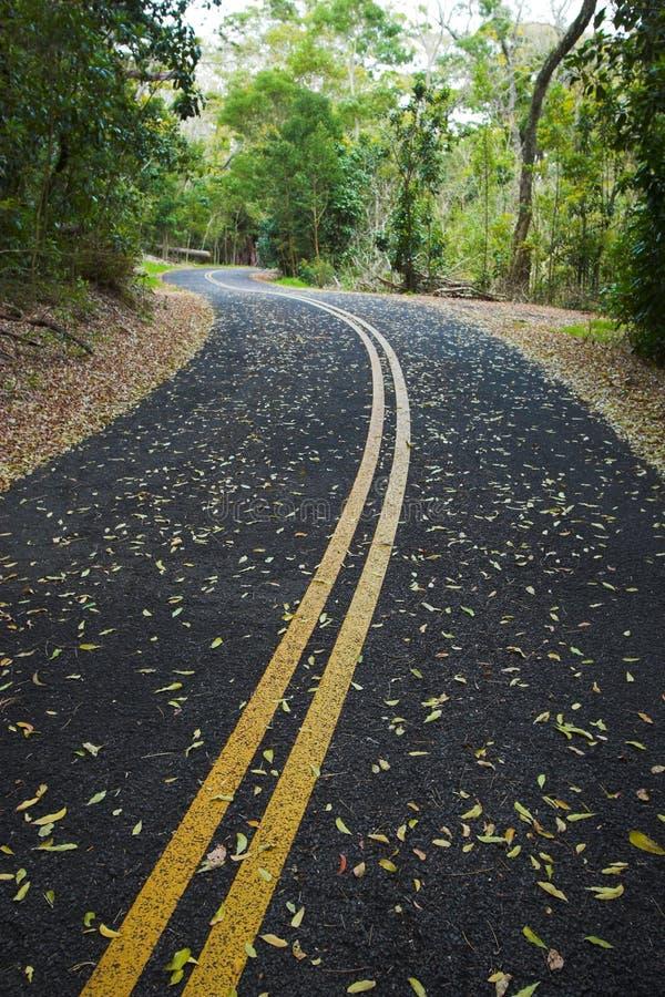 Forêt et route vertes photos stock