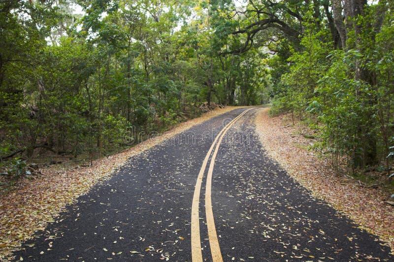 Forêt et route vertes photo libre de droits