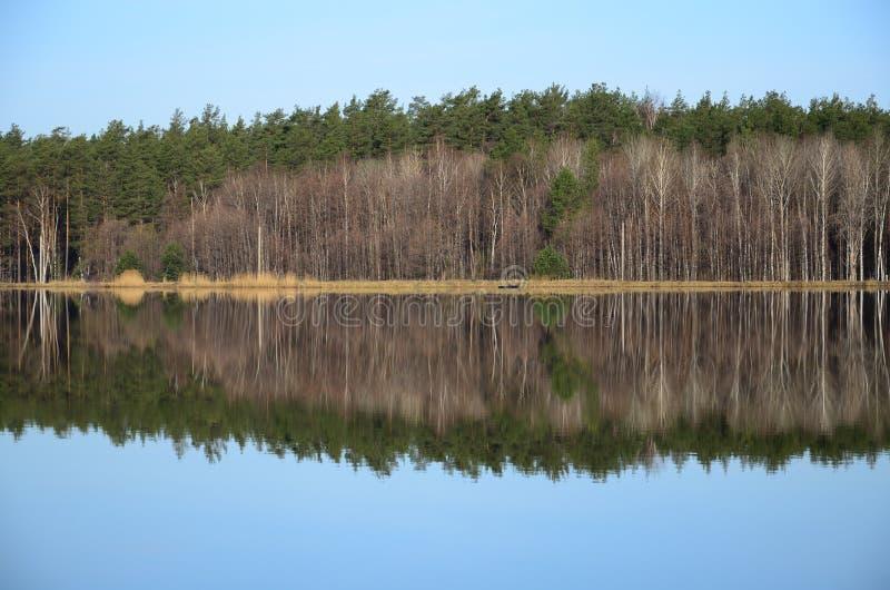 Forêt et sa réflexion dans le jour de rivière au printemps images libres de droits