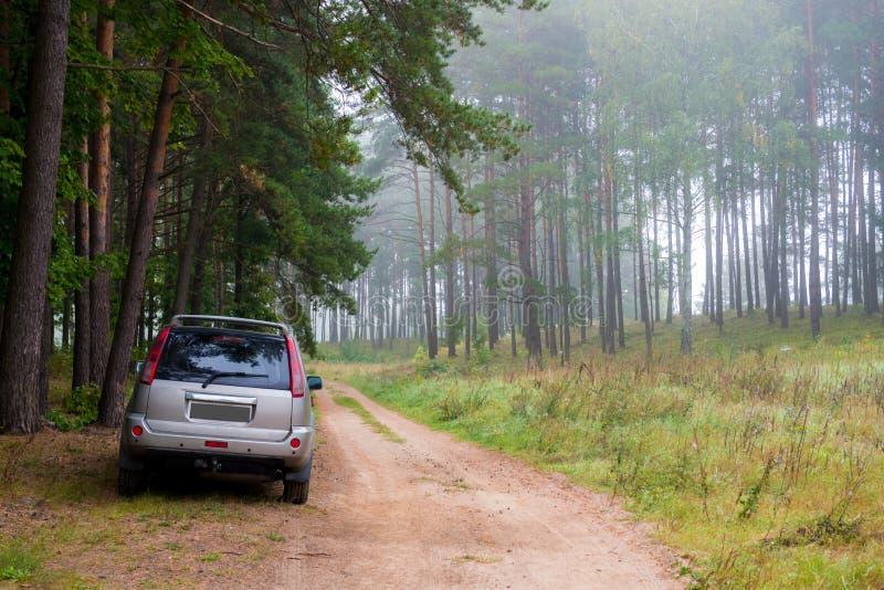 Forêt et voiture brumeuses image libre de droits