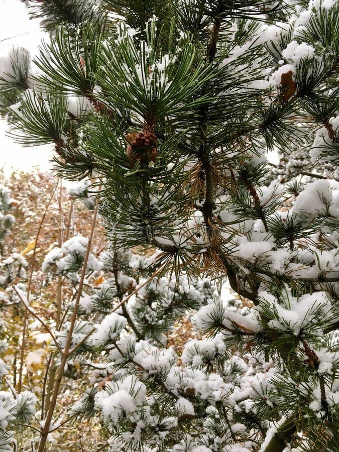 Forêt fabuleuse dans l'hiver après des chutes de neige images stock