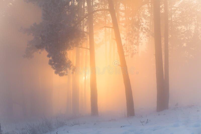 Forêt fabuleuse de l'hiver photographie stock