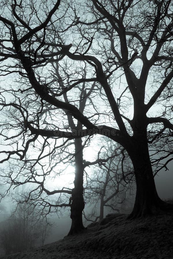 Forêt fantasmagorique photo stock