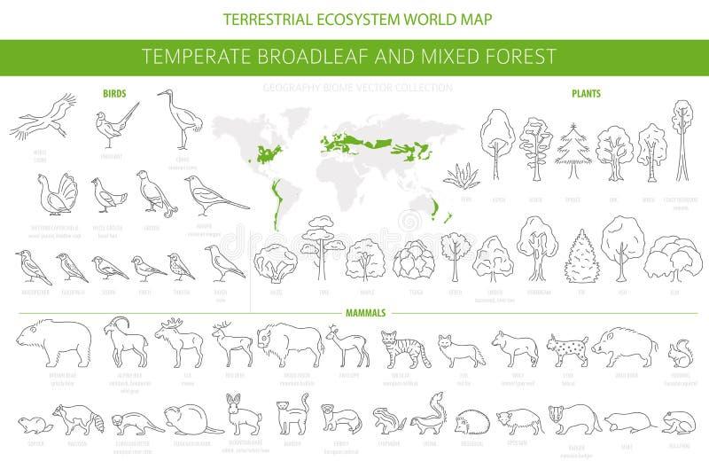 Forêt feuillue tempérée et biome mélangé de forêt Carte terrestre du monde d'?cosyst?me Ensemble d'animaux, d'oiseaux et de plant illustration libre de droits