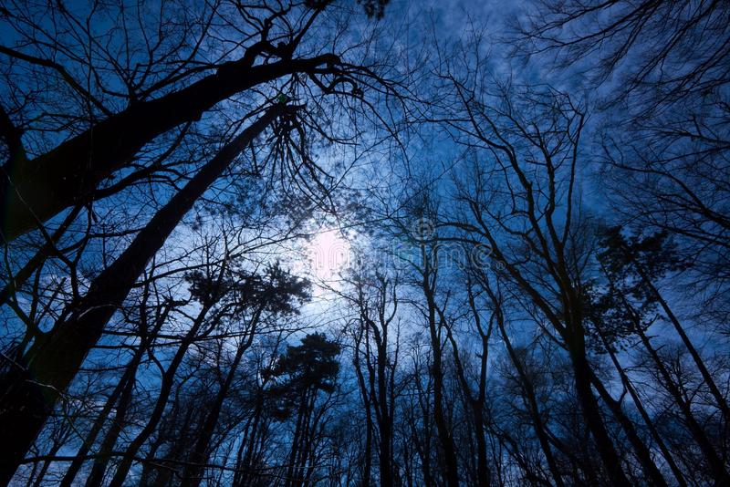 Forêt foncée images stock