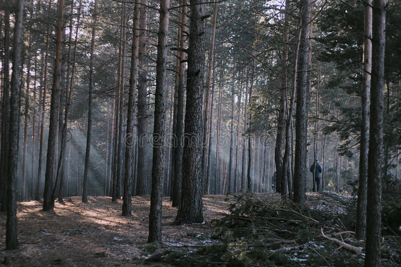 Forêt foncée photo libre de droits
