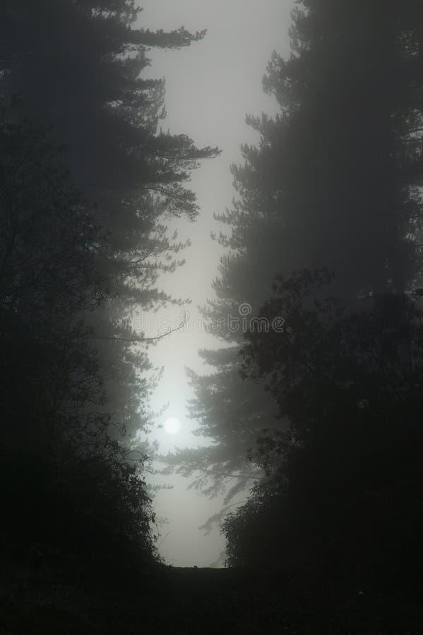 Forêt foncée de Bramshill photographie stock