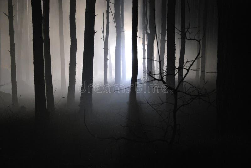 Forêt foncée de nuit dans un brouillard 05 photos libres de droits