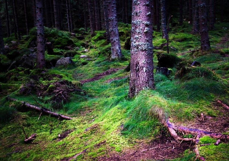 Forêt foncée dense et humide image stock