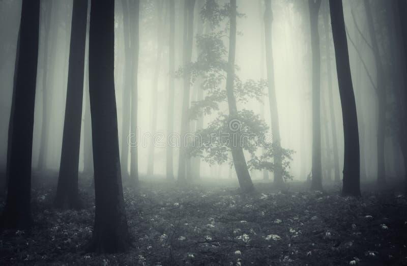 Forêt foncée enchantée mystérieuse avec le brouillard et l'arbre photo stock