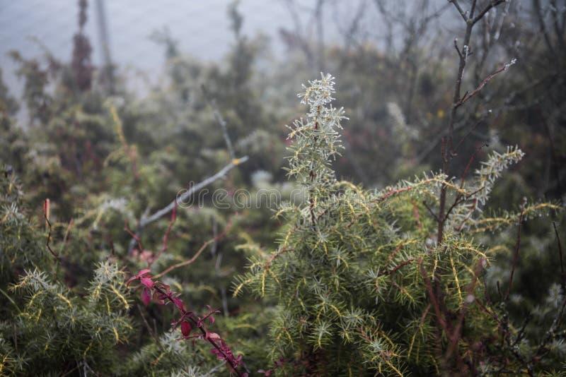 Forêt foncée mystérieuse d'automne en brouillard avec les feuilles, la route, les arbres et les branches oranges photos libres de droits