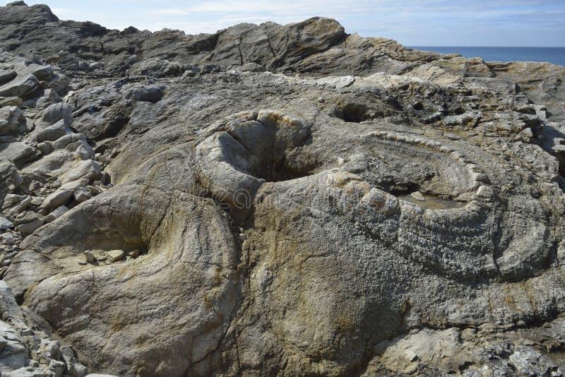 Forêt fossile photographie stock libre de droits
