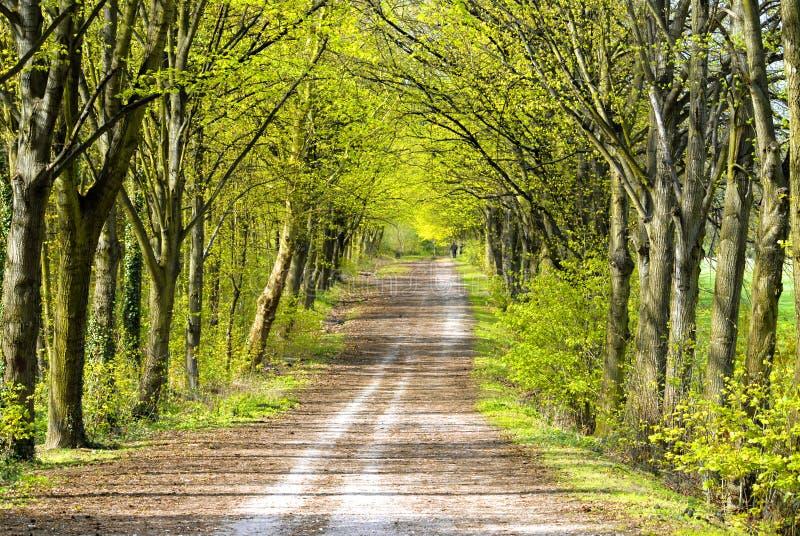 forêt France de clamart photo libre de droits