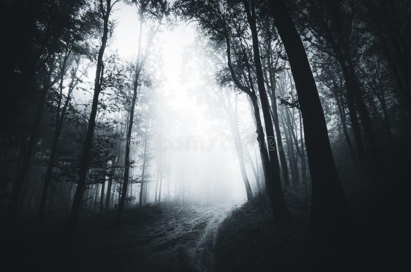 Forêt hantée par cuvette foncée de route photos stock