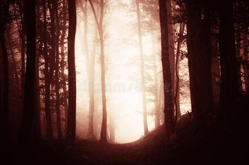 Forêt hantée surréaliste de rouge de cauchemar photos stock